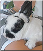 Sternchen the Dwarf Rabbit