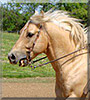 Honey the Quarter Horse