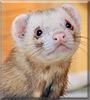 Sid the Ferret