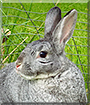 Darby the Rabbit
