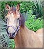 Dolche the Quarter Horse, Thoroughbred