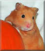 Anthony the Hamster