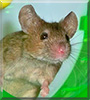 Marty the House Mouse