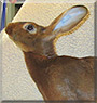 Gretel the Belgian Hare