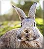 Chalchiuhtice Vimpula the Rabbit