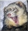 Symba the Ferret