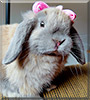 Maruchan the Rabbit