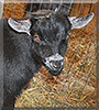 Talon the Pygmy Goat