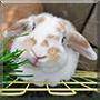 Appie the Rabbit