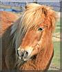 Charlie the Pony