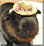 Digby the Guinea Pig