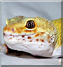 Cloud the Leopard gecko