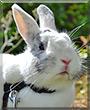 Ezekiel the Angora Rabbit