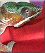 Jem the Chameleon