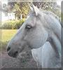 Fancy the Horse