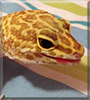 Solar the Leopard Gecko