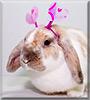 Milla the Mini Lop Rabbit