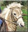 Pipps the Shetland Pony mix