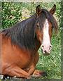 Kamara the Paso Fino Horse
