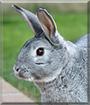 Winter the Rabbit