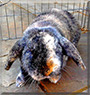 Louby Lou the Lop Earred Rabbit
