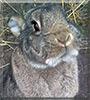 Angelina the Rabbit