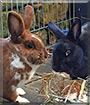 Jack, Lora the Rabbit