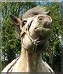 Moritz the Horse