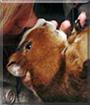 Piggers the Guinea Pig