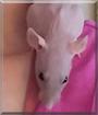 Princess Peach the Hairless Rat
