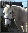 Echo the Quarter Horse/Thoroughbred
