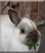 Snowflake the Rabbit