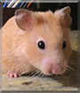 Coco the Hamster