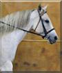Fancy Pants the American Quarter Horse