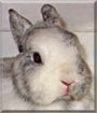 Molly the Dwarf Rabbit