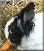 Flecky the Rabbit