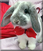 Dr. Hopenheimer the Mini Lop Rabbit