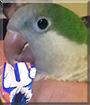 Juan the Quaker Parrot