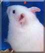 Emma the Hamster