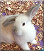 Bunnelby the Rabbit