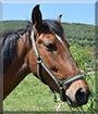 Astro the Horse