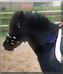 Paulinchen the Shetland Pony