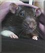 Skunk the Rat
