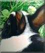 Ferdinand the Dwarf Rabbit