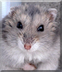 Norinka the Hamster
