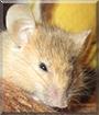 Redd the Fancy Mouse