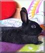 Max the Dwarf Rabbits