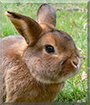 Fritzi the Rabbit