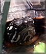 Boris the Turtle