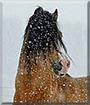 Sunny the Welsh-B Pony